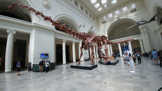 Field Museum Maximo