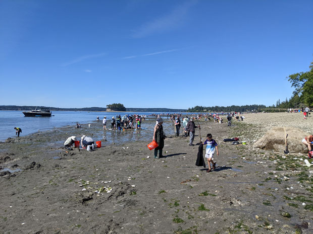 Kopachuck State Park clam digging