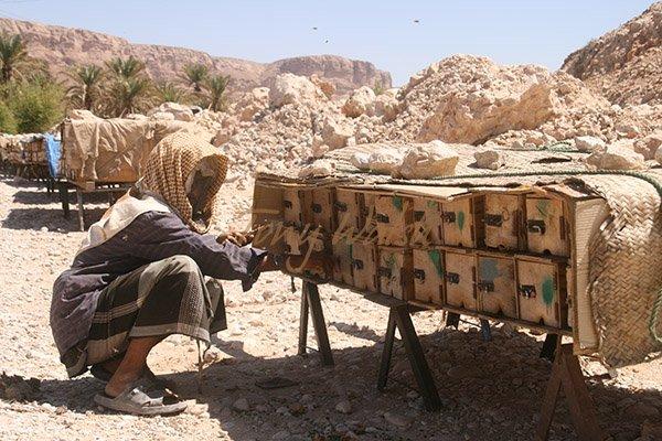 Bee Hives in Wadi Dawan