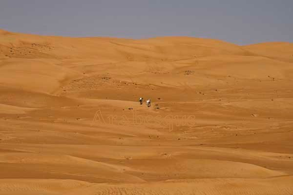 Camels in the Oman Desert