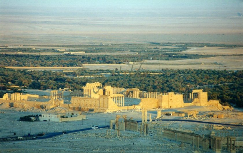 City of Palmriya
