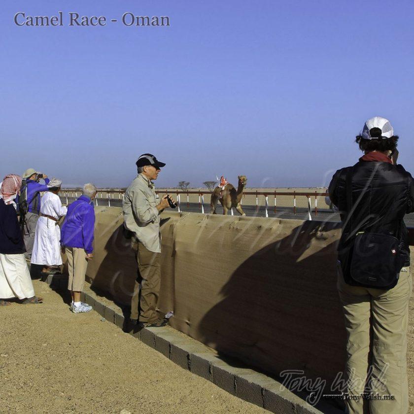 Camel Race - Oman