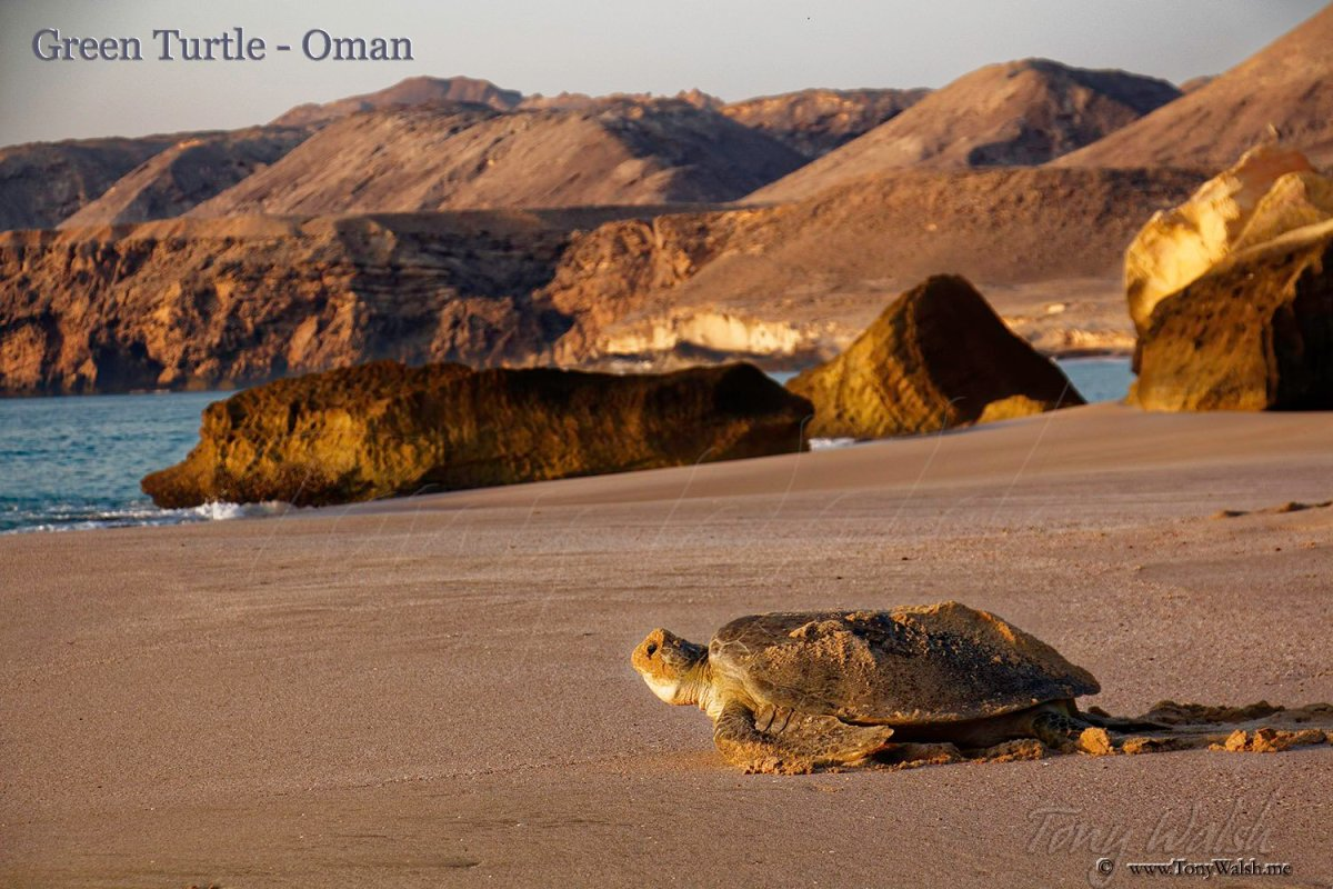 10 Reasons to visit Muscat this Winter – 5-1