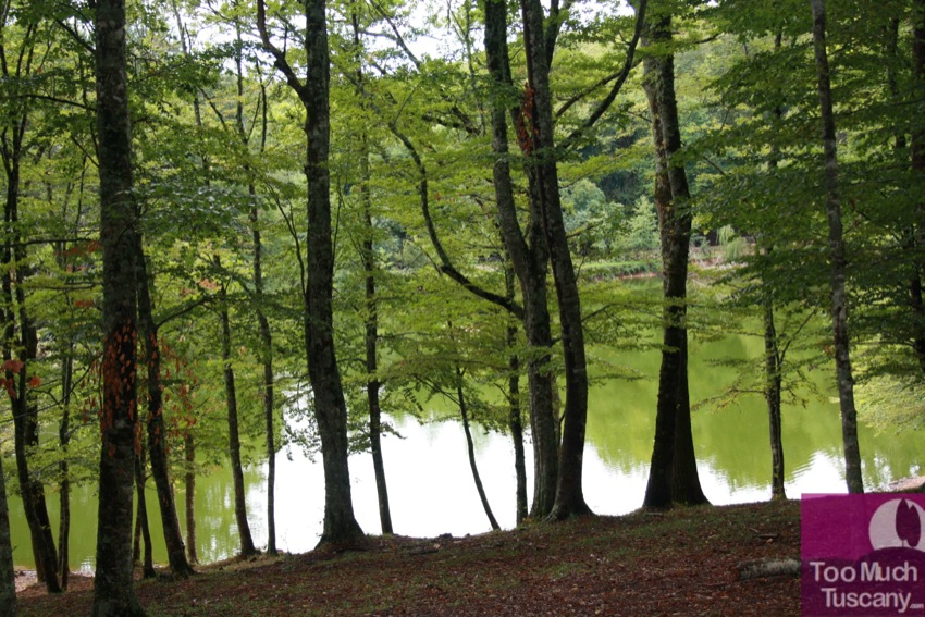 Umbra forest