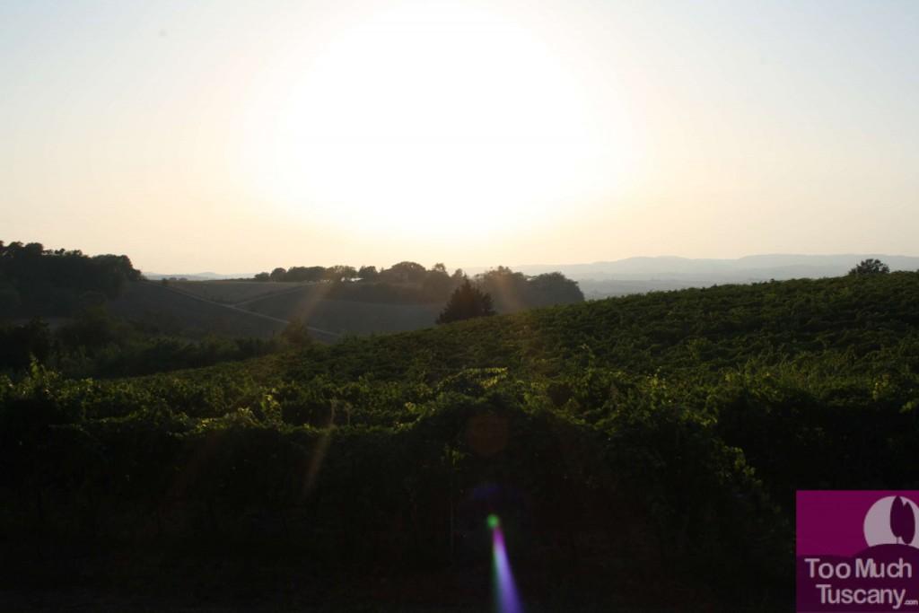 Vineyards of Villa Acquaviva