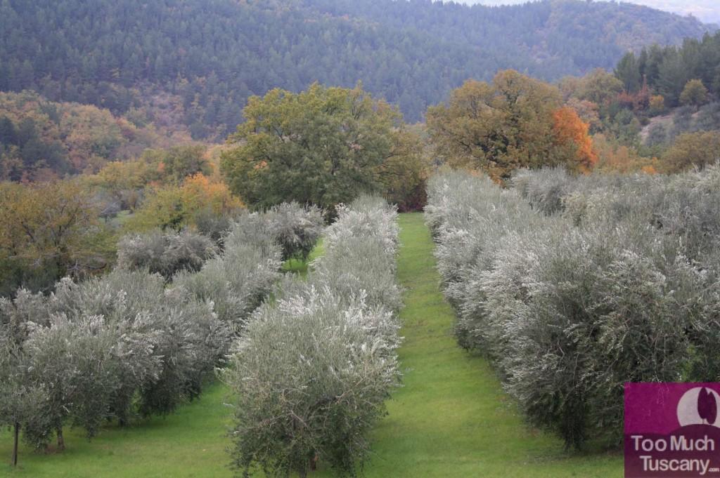 Giano surroundings