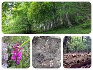 The wood of Saint Francis