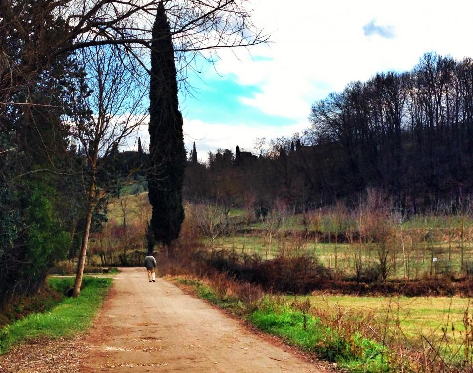 Landscape of Bagno a Ripoli countryside