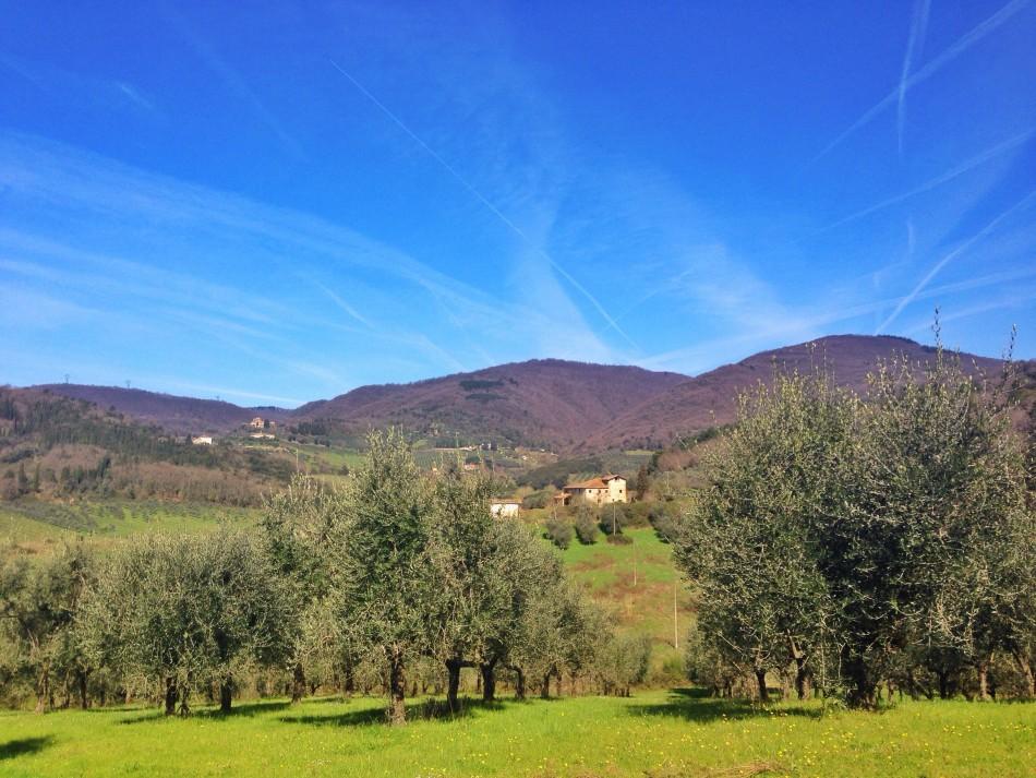 Surroundings of Villa La Palagina in Valdarno
