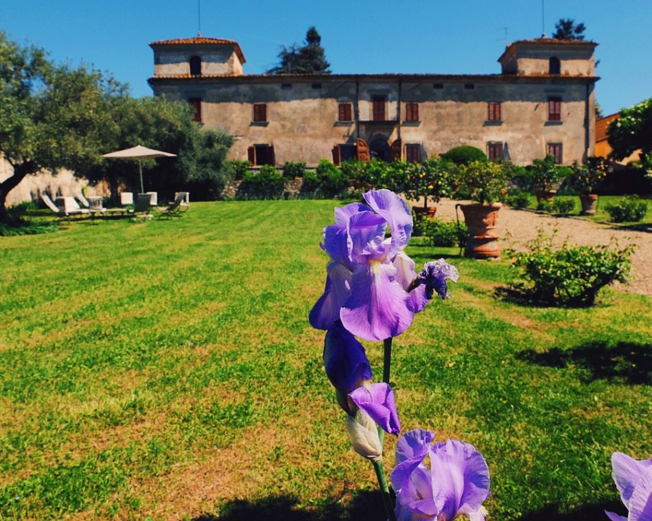 Iris in the garden - Villa di Lilliano