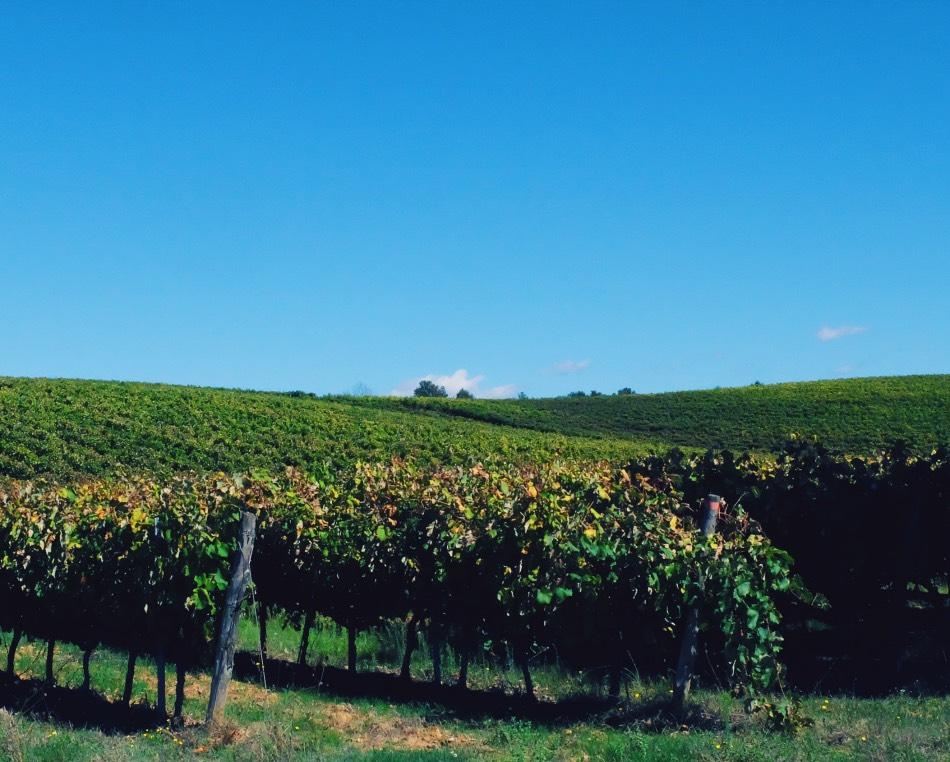 Biking in Tuscany - Monteriggioni