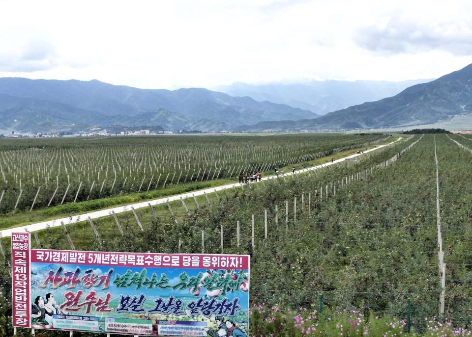 Apple farm in North Korea