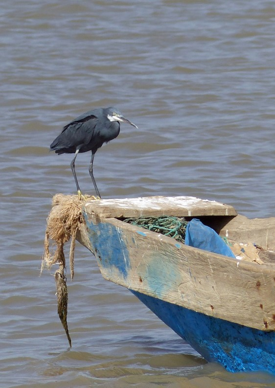 Heron on a blue boat