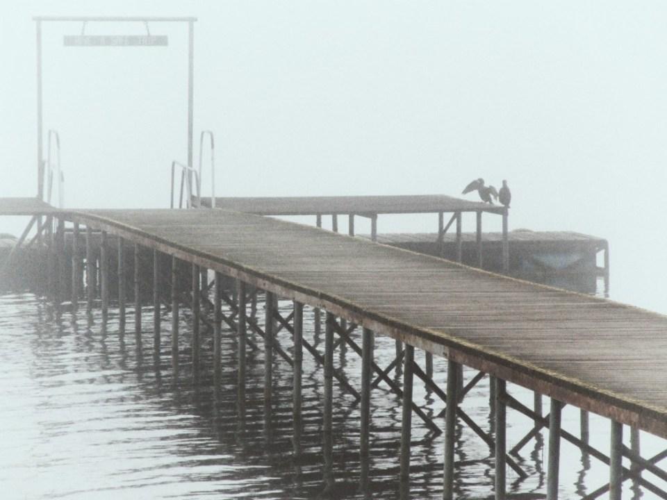Wooden jetty, cormorants, fog