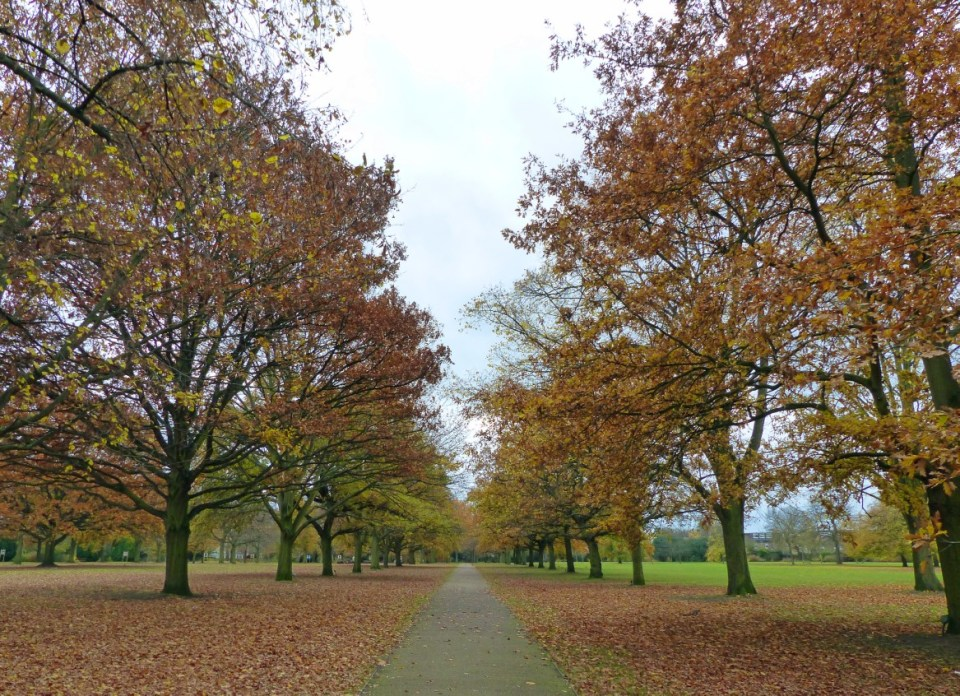 Path in a park lined with autumn trees