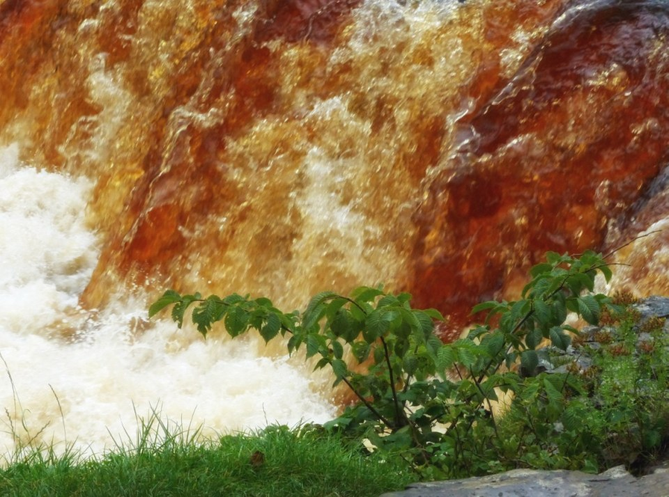 Brown water cascading past leaves