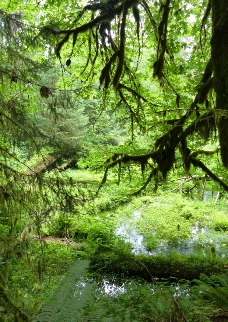 Small creek and overhanging trees