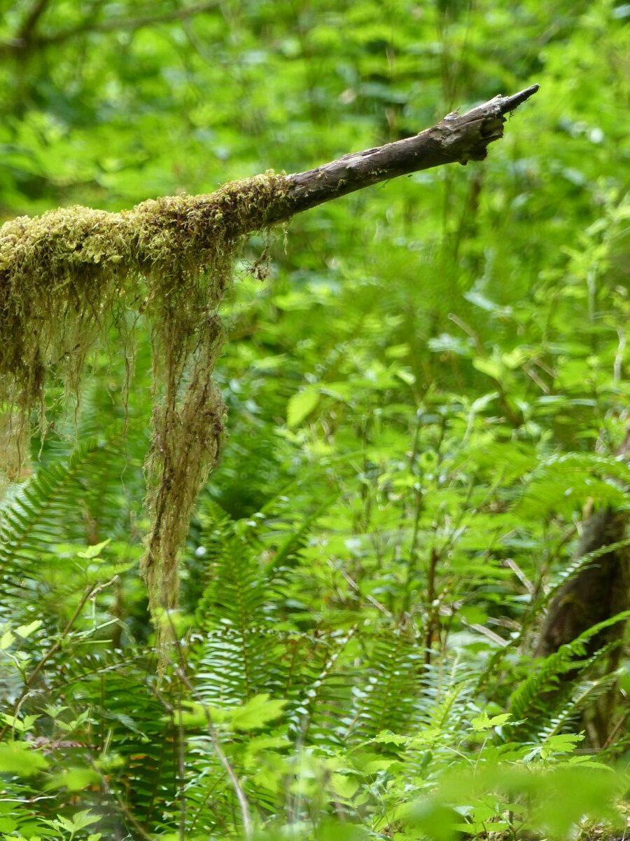 Moss draped on a branch