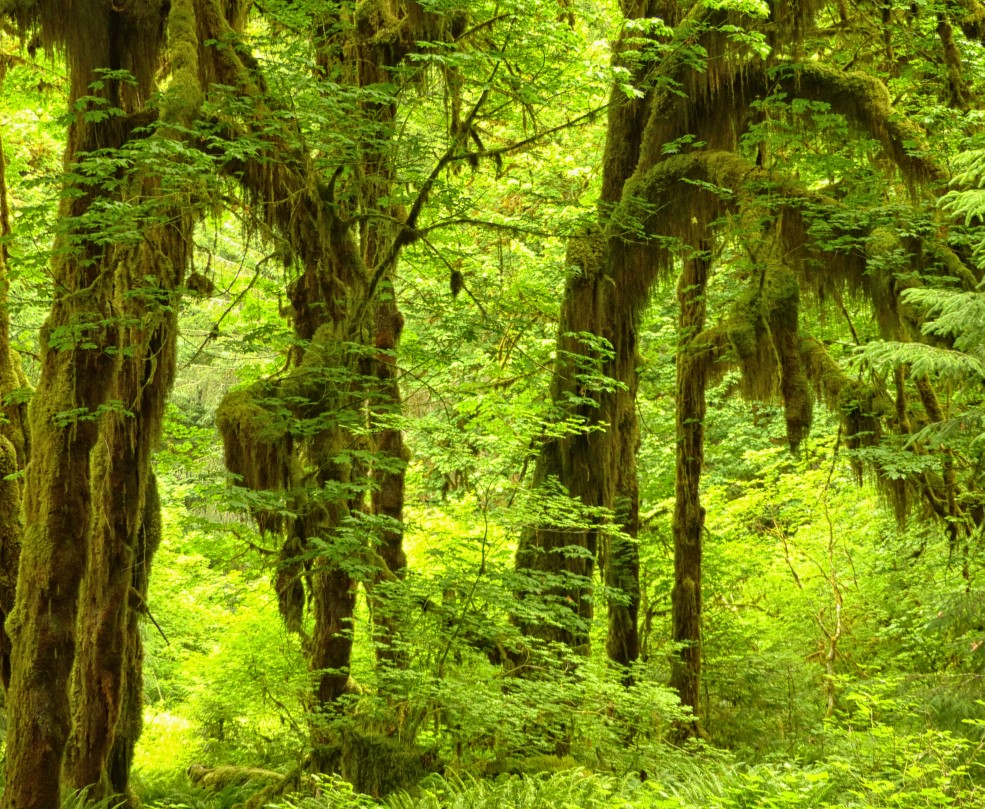 Tall trees, lots of ferns