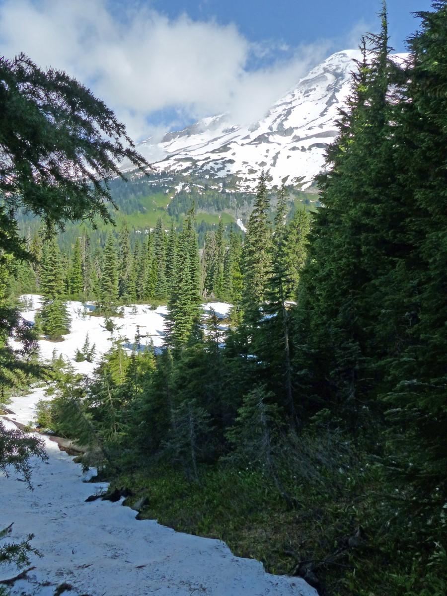 Pine trees in snowy landscape
