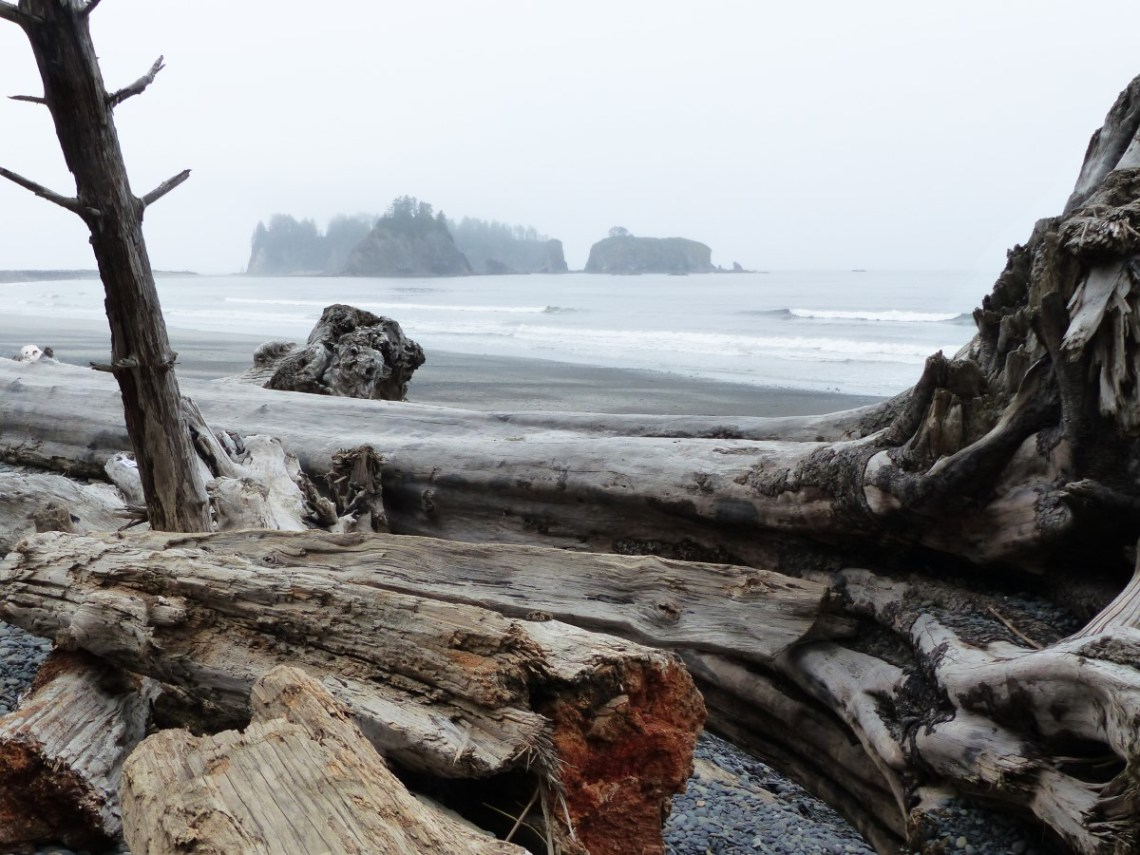 Large tree trunks on a beach and foggy offshore islets