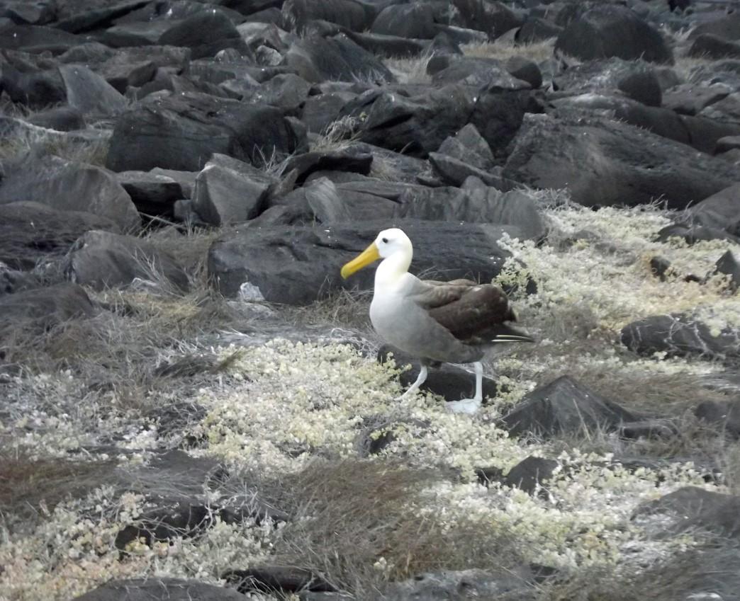 Large bird among rocks