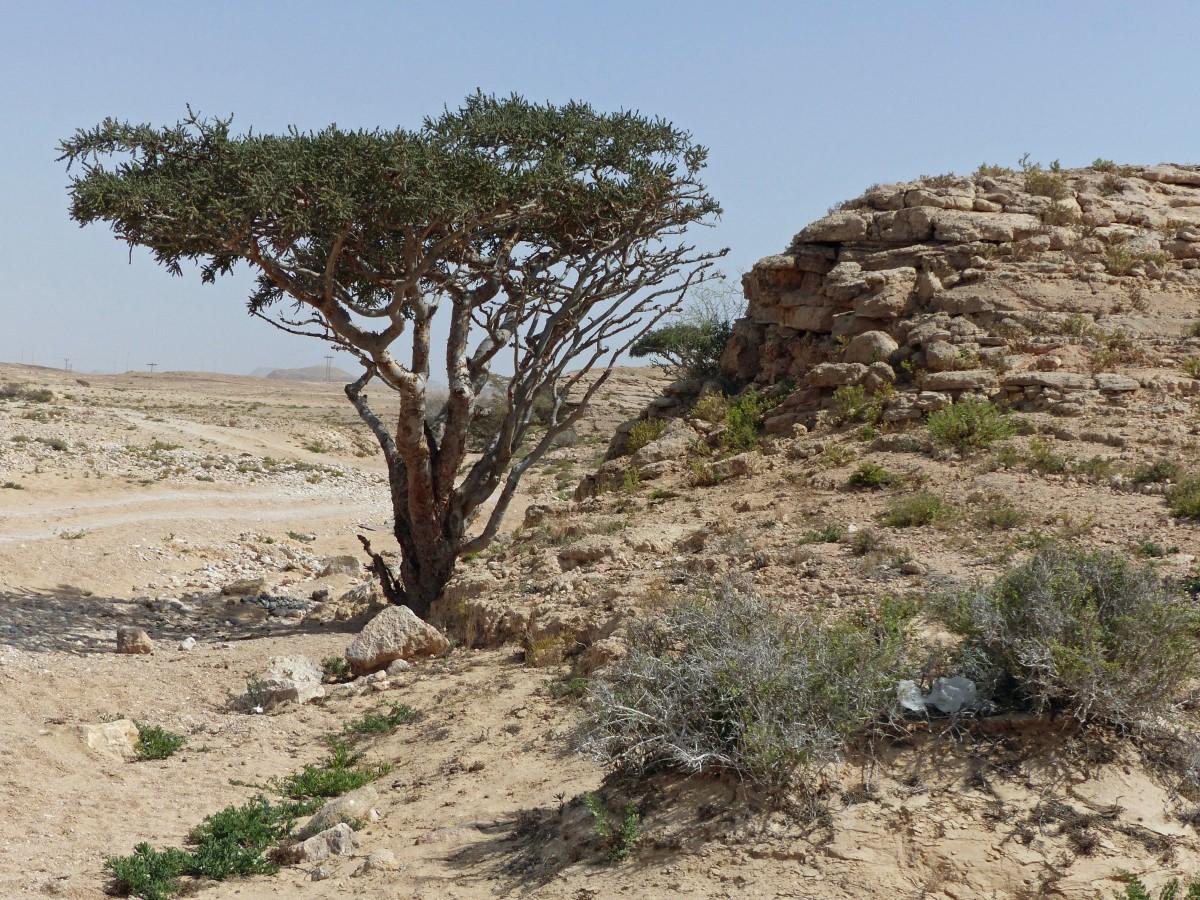 Scrubby trees in a barren landscape