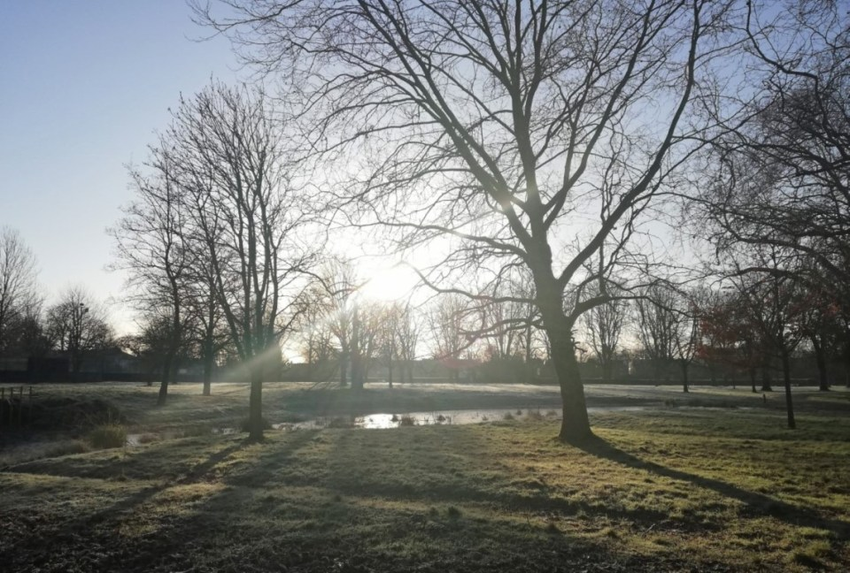 Frosty park with trees and small pond
