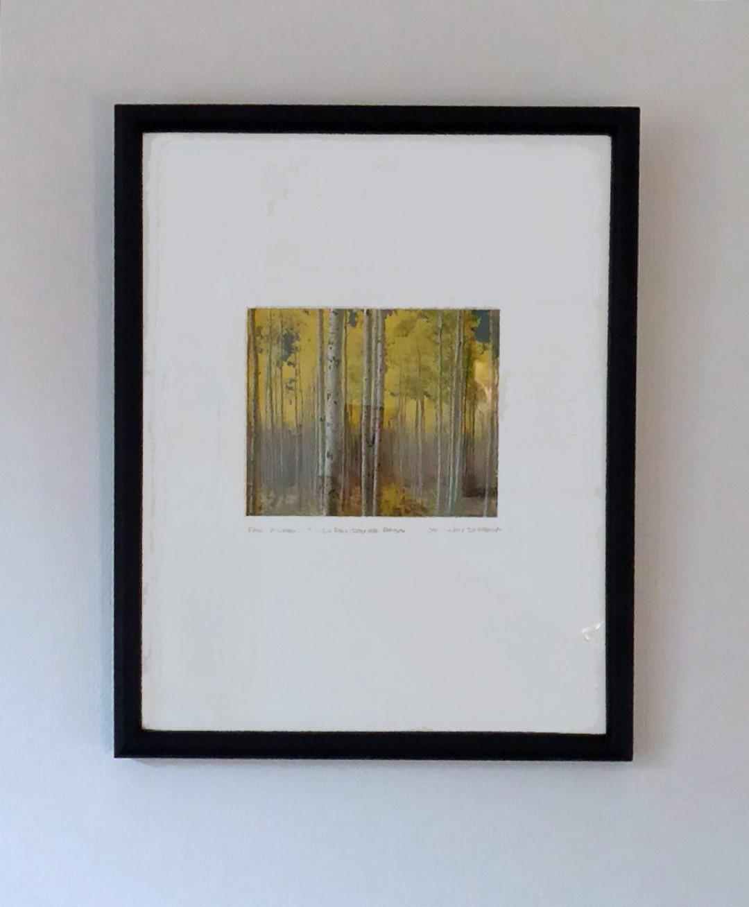 Photo of yellow aspens