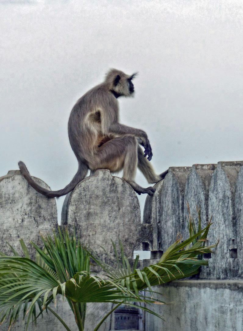 Monkey on a stone wall