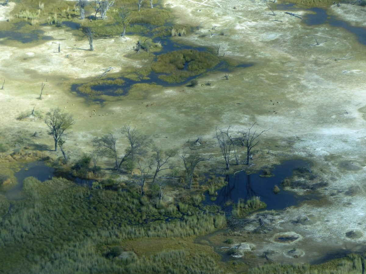 Aerial view of green swampland
