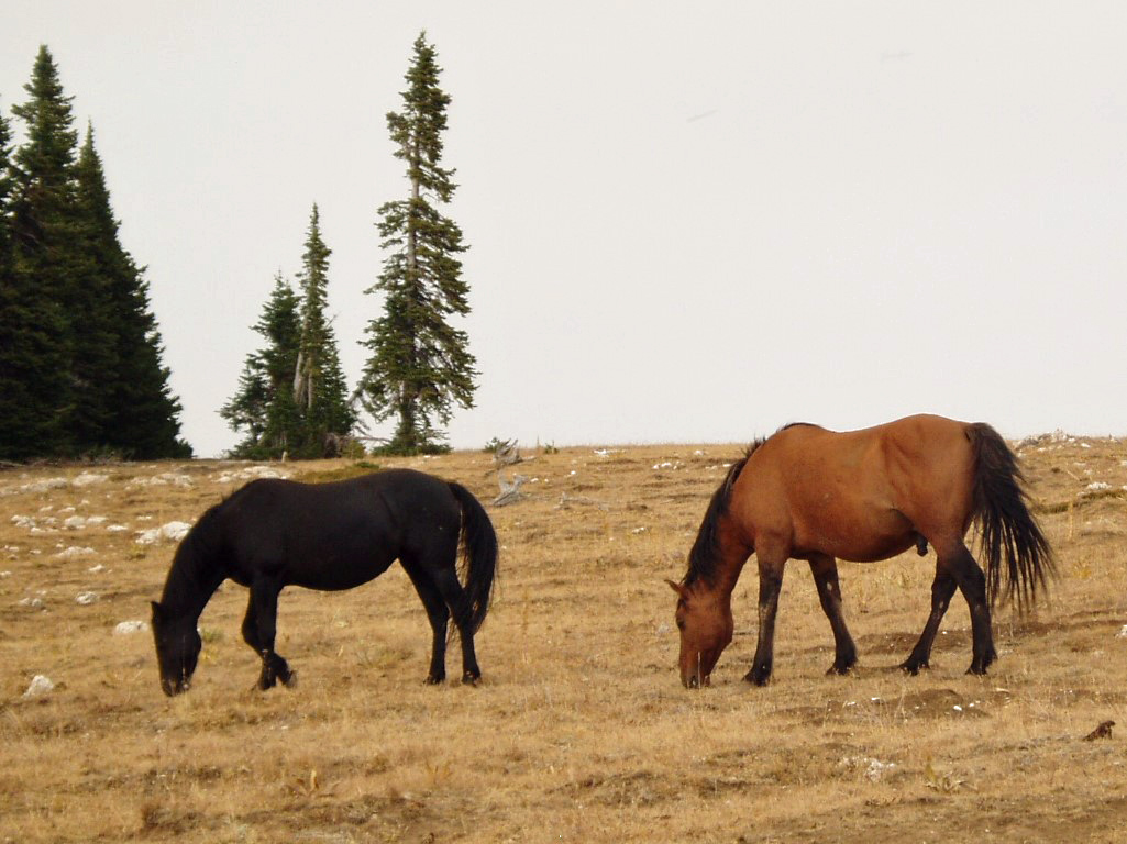 Two horses grazing on rough ground