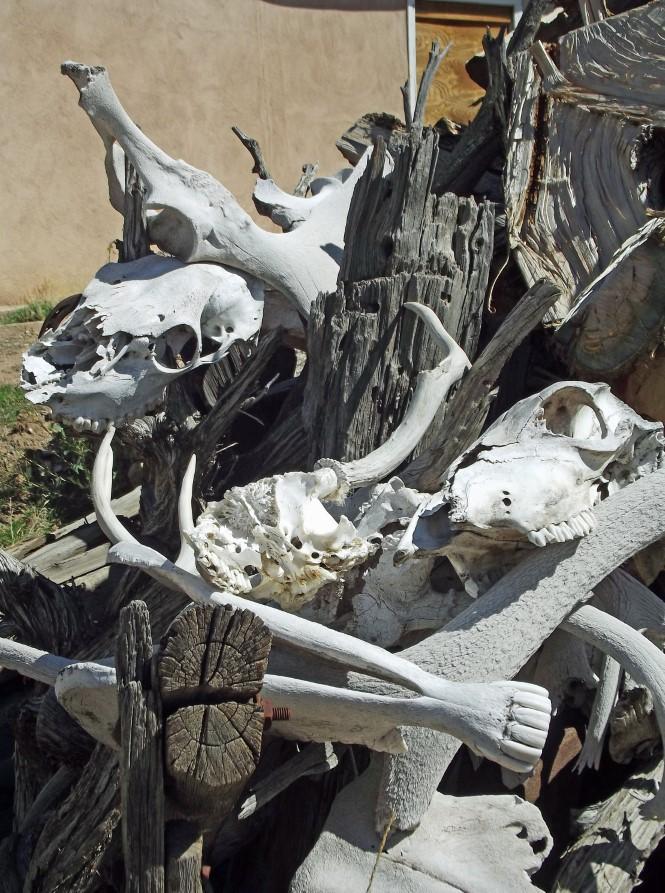 Pile of bleached animal bones