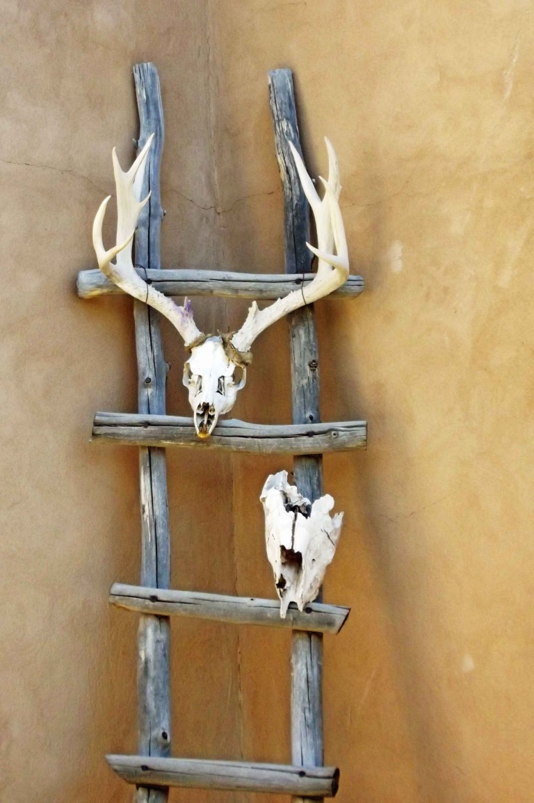 Wooden ladder with animal skulls
