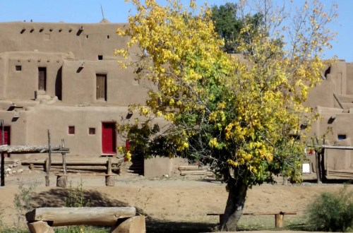 Small tree with pueblo houses behind