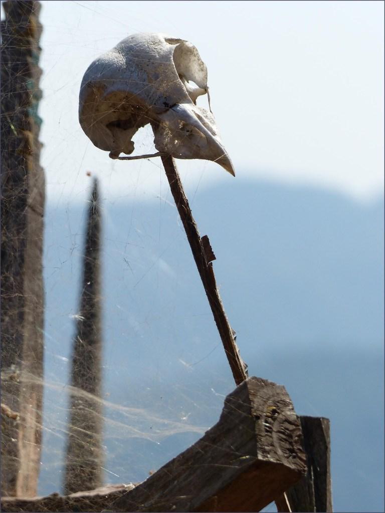 Bird's skull on a wooden stick