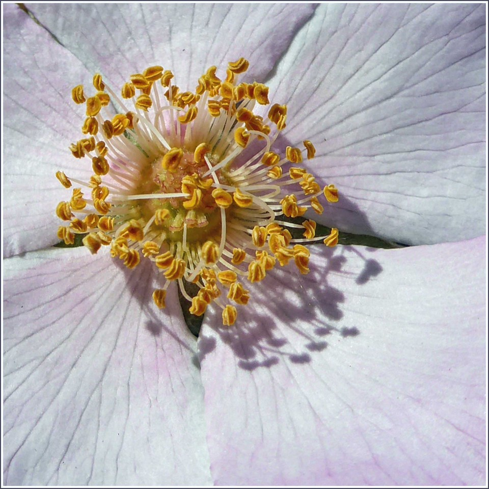Close-up of delicate pink flower