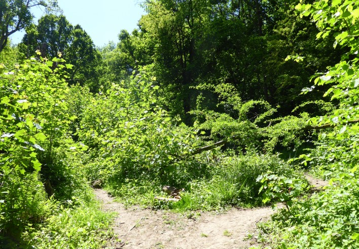 Path surrounded by shrubs