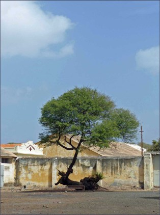 Buildings with peeling paint, twisted tree