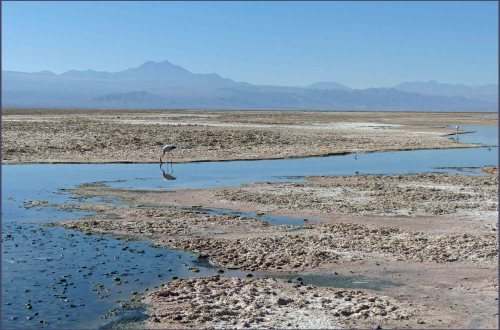 Landscape with flamingos, water, salt flats and mountains