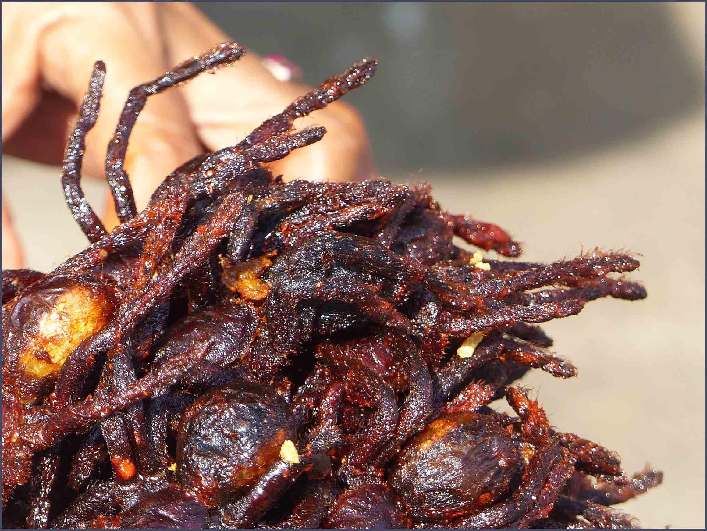 Close-up of fried tarantulas