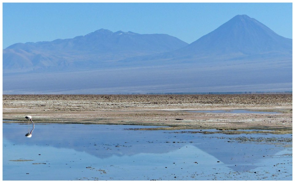 Landscape with flamingo, water, salt flats and mountains