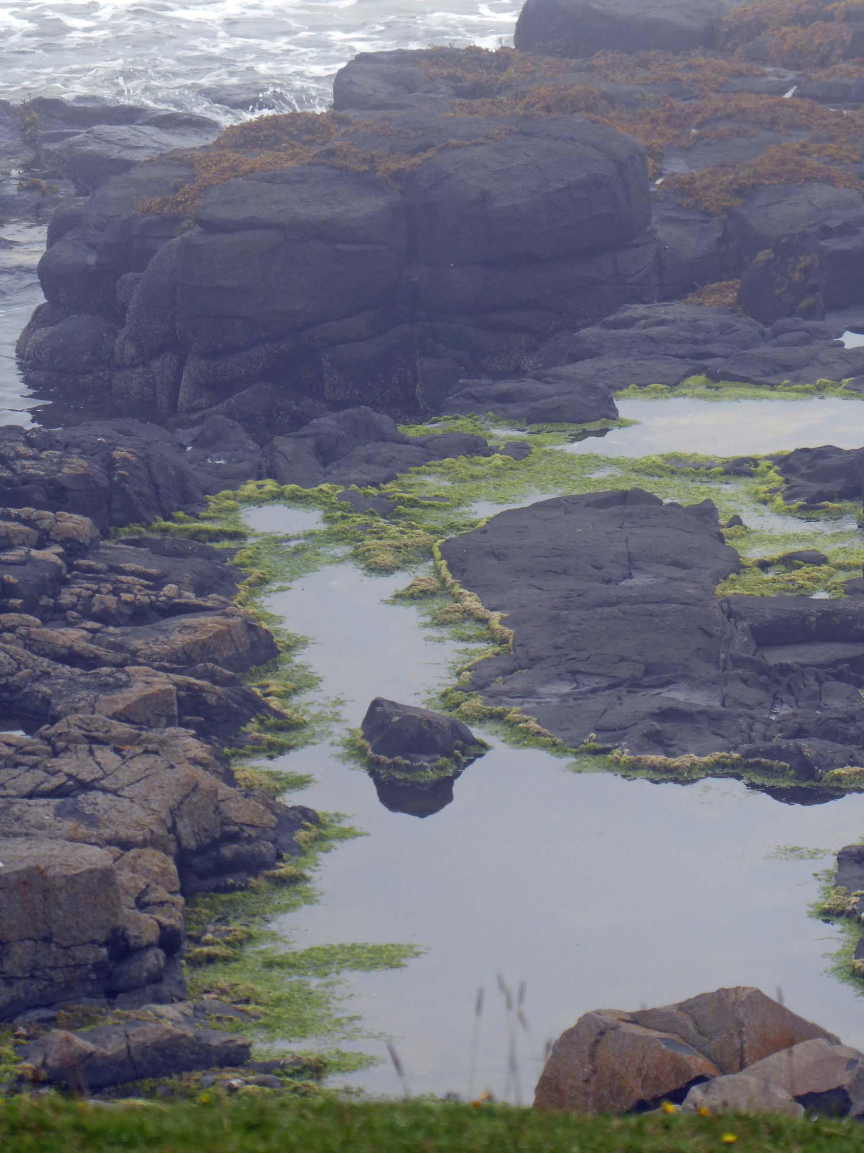 Rock pools edged with green seaweed