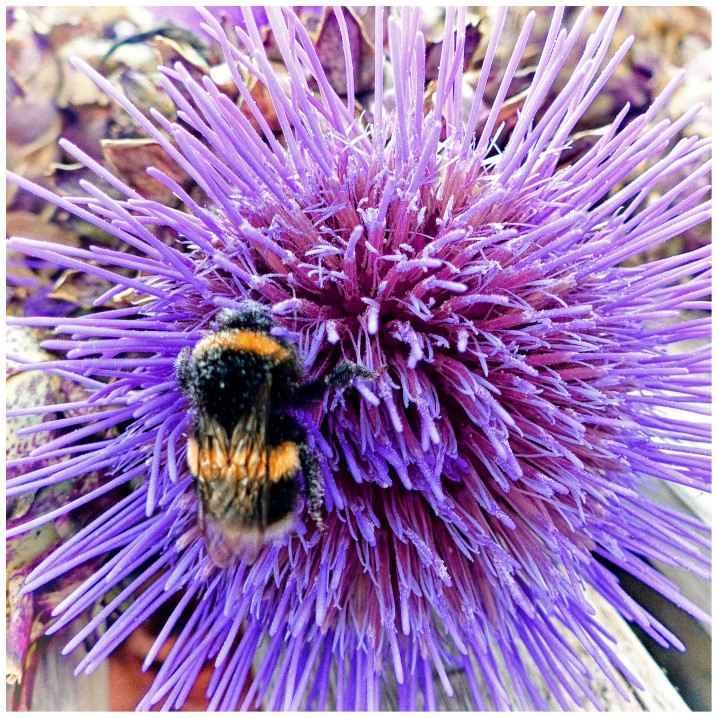 Purple flower with bee