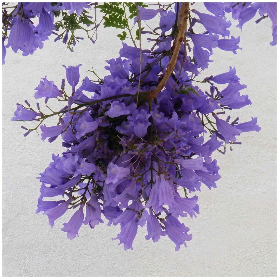 Purple flower in front of a stone wall