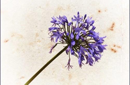 Purple flower on a long stem