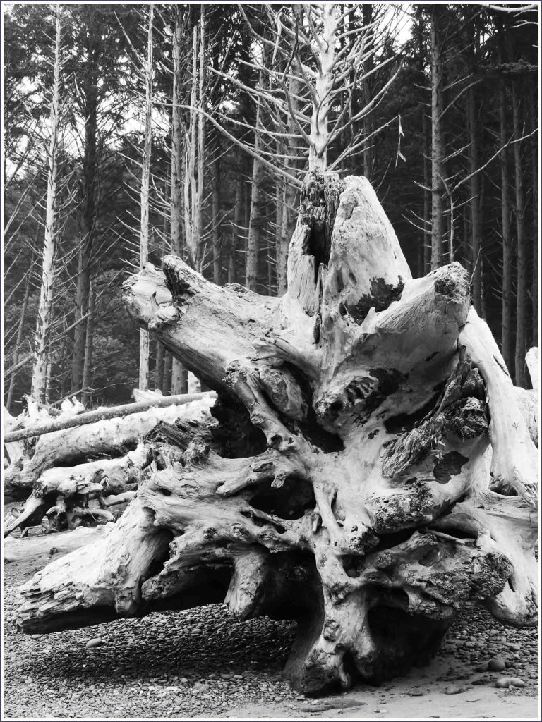 Black and white photo of weathered tree trunk