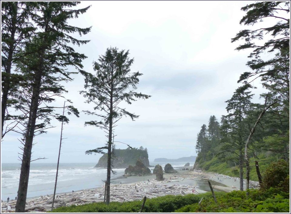 View of beach with sea stacks and tree trunks