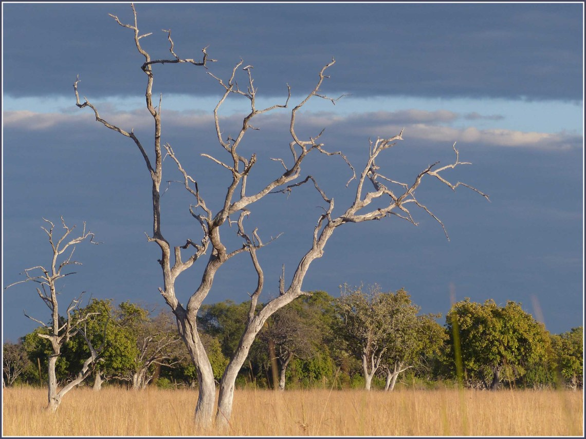 Dead tree and long grass