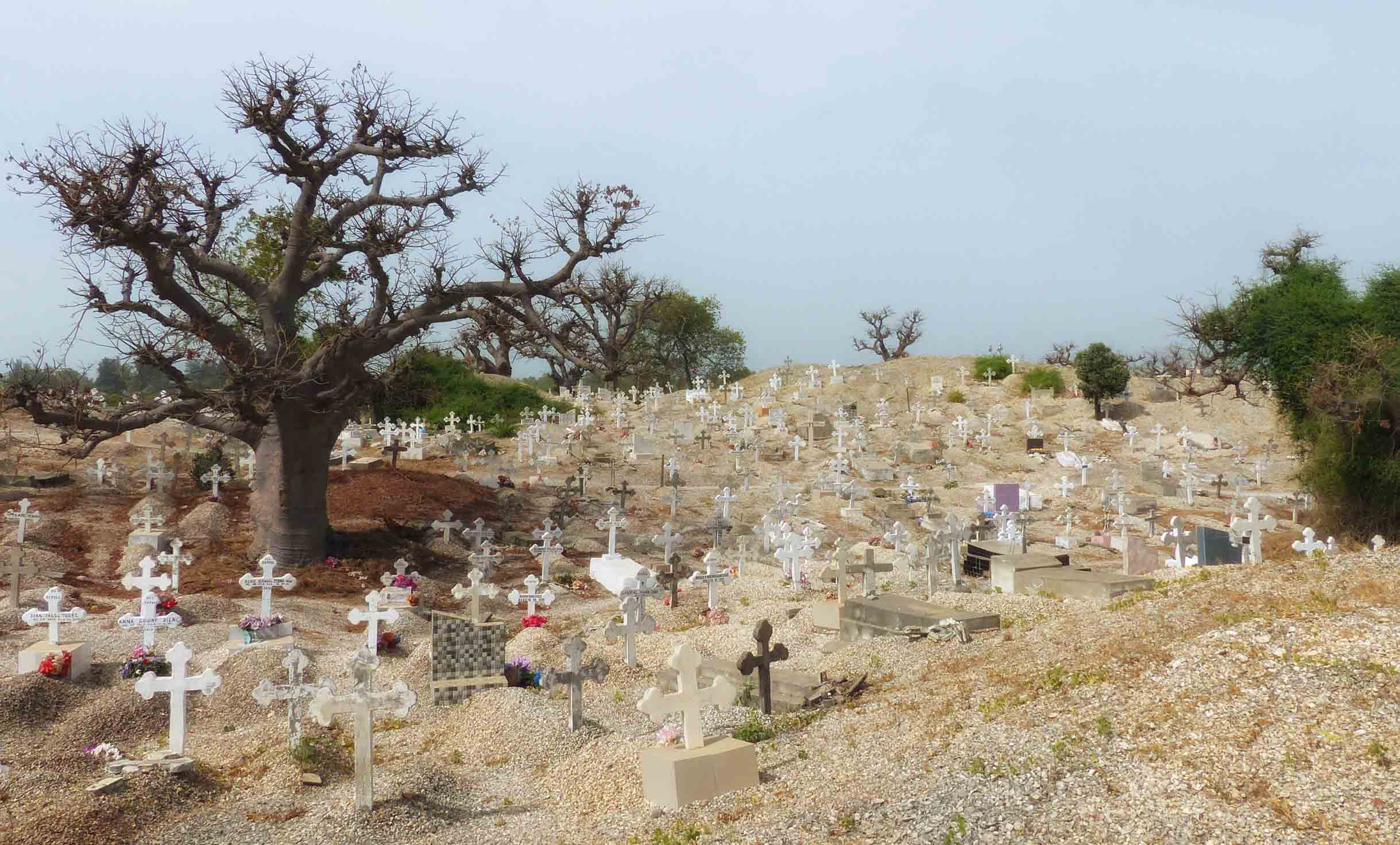 Cemetery with banyan trees